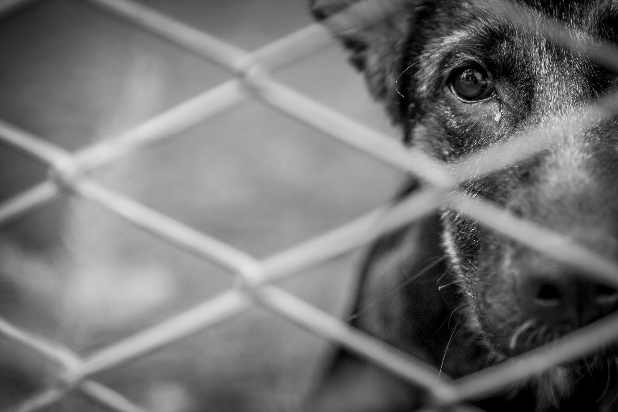 Kleiner Hund in Dresden geköpft! Polizei sucht Zeugen